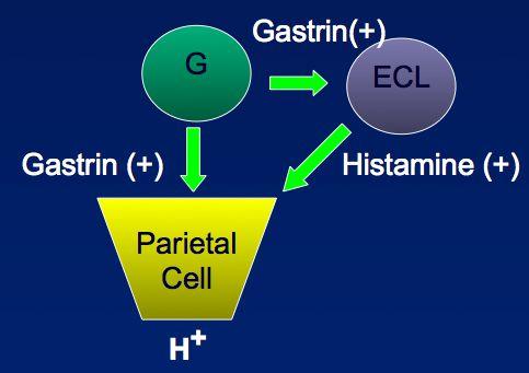Gastrointestinal Flashcards by Scott Jelinek   Brainscape
